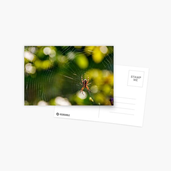 spider in the web on beautiful foliage bokeh Postcard