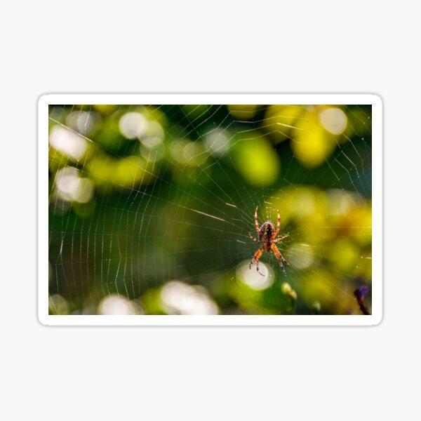 spider in the web on beautiful foliage bokeh Sticker