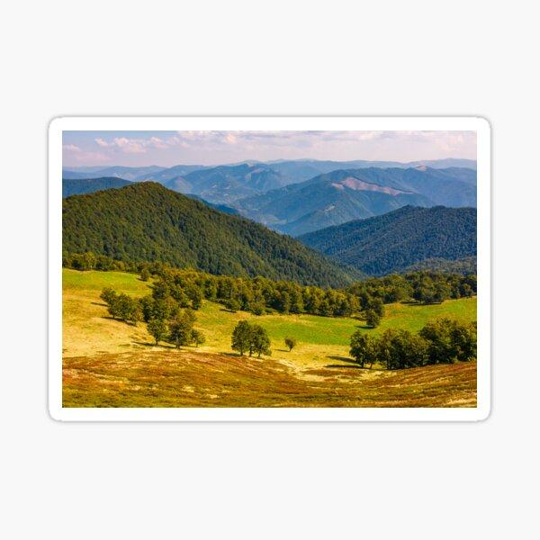 beech trees meadow on hillside in autumn Sticker