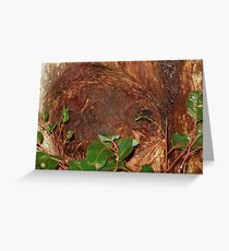 Trunk Of An Ancient Red Tingle Tree Greeting Card