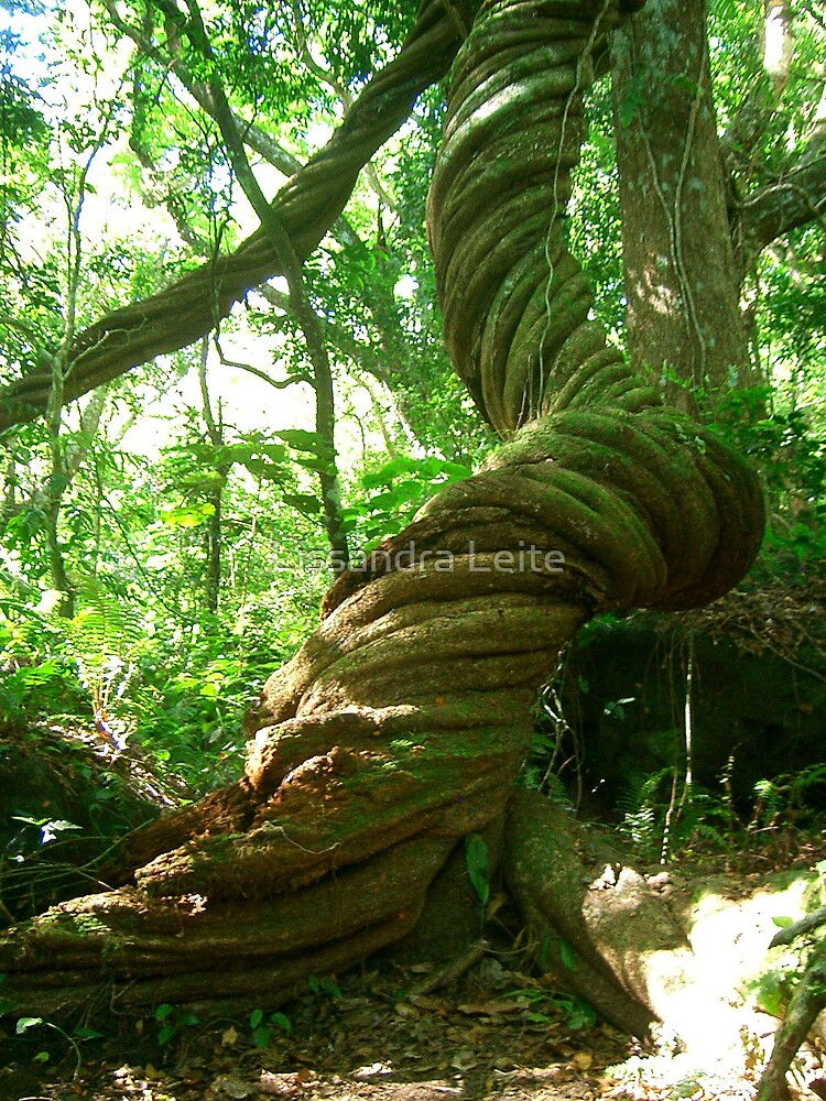 Fiji Tree by Lissandra Leite