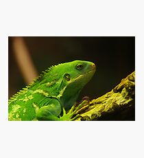 Reptile Photographic Print