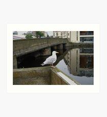 Seagull Surveys Art Print