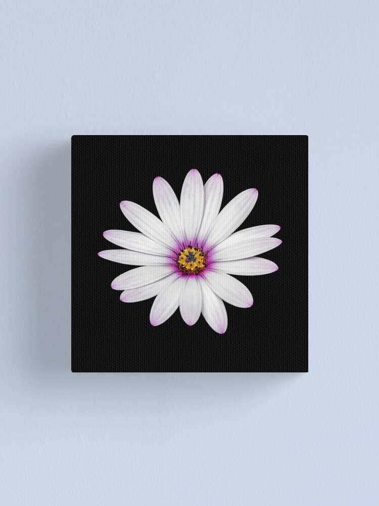 Alternate view of African Daisy Canvas Print