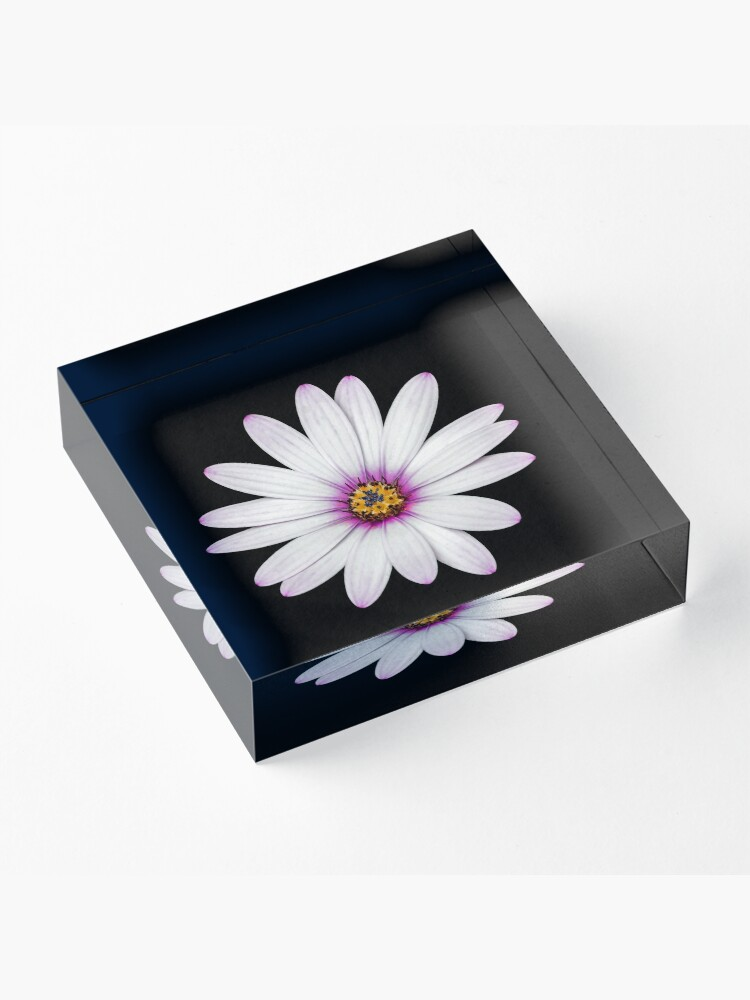 Alternate view of African Daisy Acrylic Block