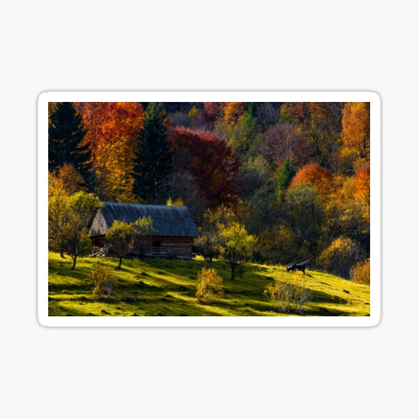 cow near woodshed in autumn forest Sticker