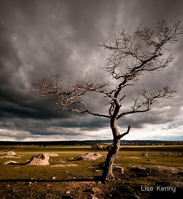 the Dog Rocks tree by Lisa Kenny