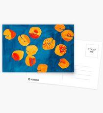 Orange apricots Postcards