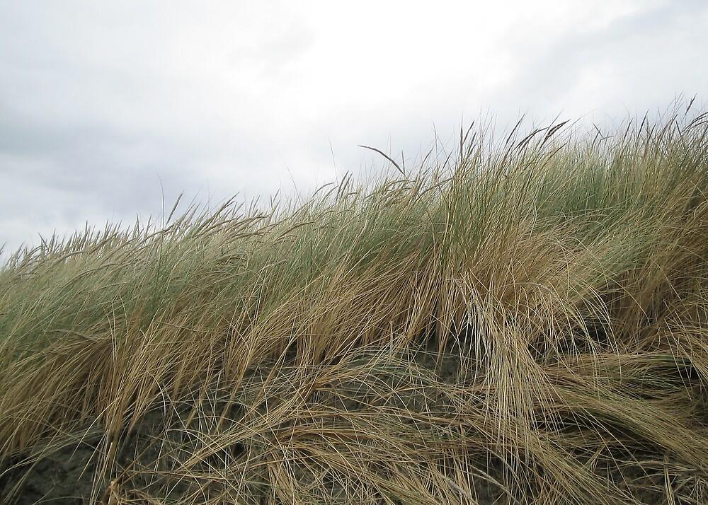 Grass by abby hughes