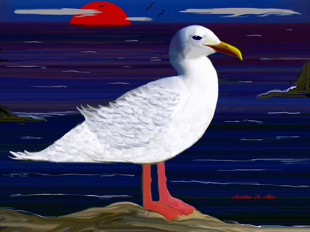 SEAGULL by Madeline M  Allen