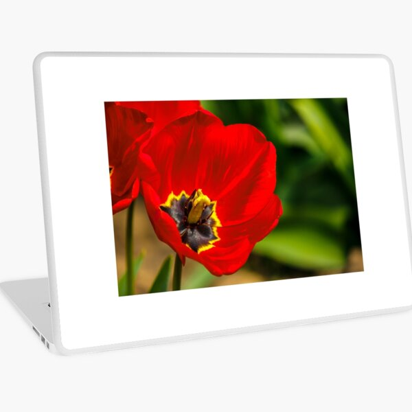 red tulip on green blurred background  Laptop Skin