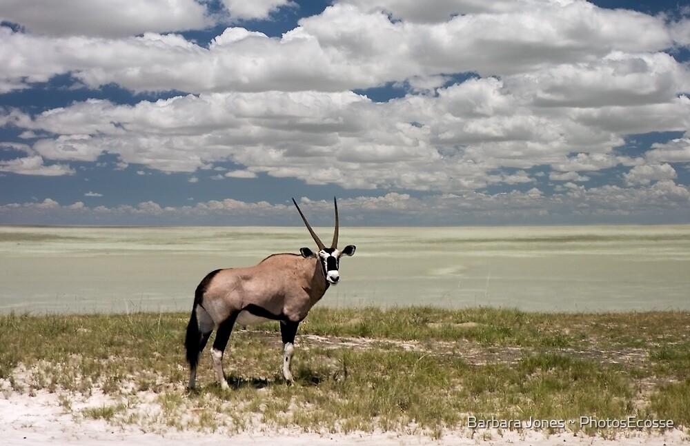 Oryx / Gemsbok,  and Etosha National Park ,Saltpan, Namibia, Africa. by PhotosEcosse