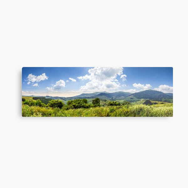 meadow with flowers in mountains Metal Print