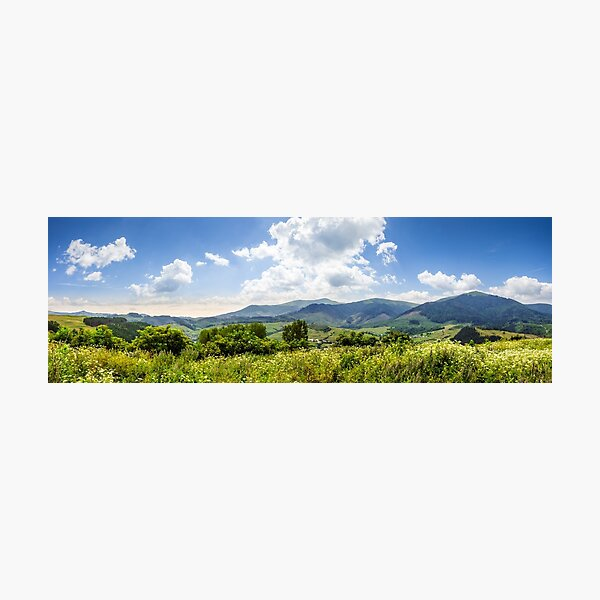meadow with flowers in mountains Photographic Print