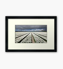 Tulips before the storm Framed Print