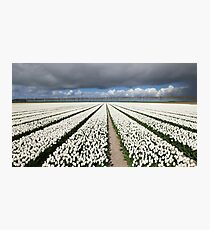 Tulips before the storm Photographic Print