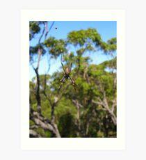 Golden Orb Weaver Spider Art Print
