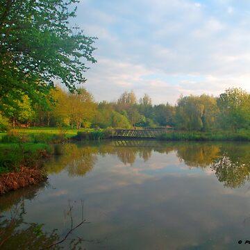 Sunday Morning at the Lake by trish725