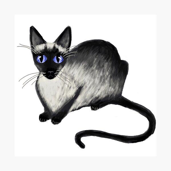 Siamese Cat Photographic Print