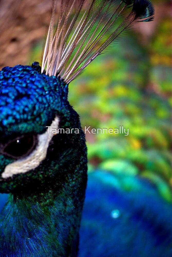 Peacock I by Tamara  Kenneally