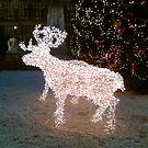 Reindeer in lights by christinawalker