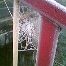 Spidersweb at Christmas by christinawalker