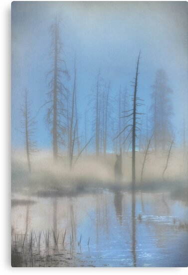 Tree Skeletons at Dawn.  Yellowstone National Park. Wyoming. USA. by PhotosEcosse