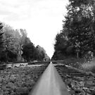 Country Tracks. by buddyboy