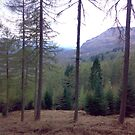 Trees in scotland by christinawalker