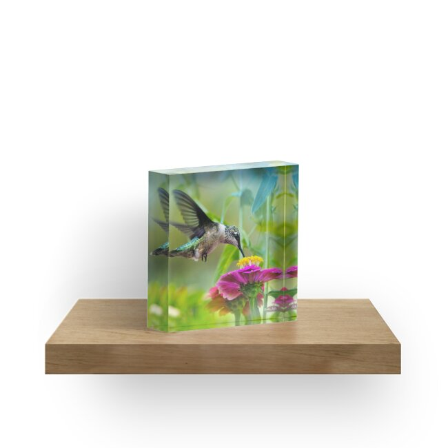 Sweet Hummingbird Square by Christina Rollo