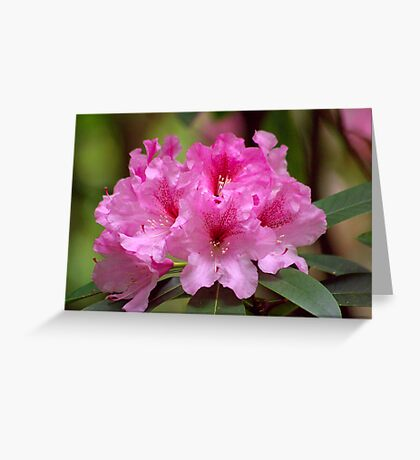 In The Pink Greeting Card