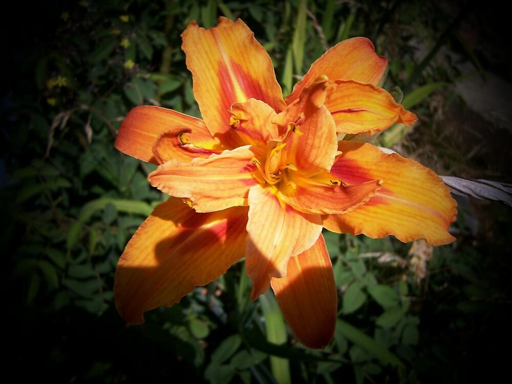Red Yellow Orange by zoe1485