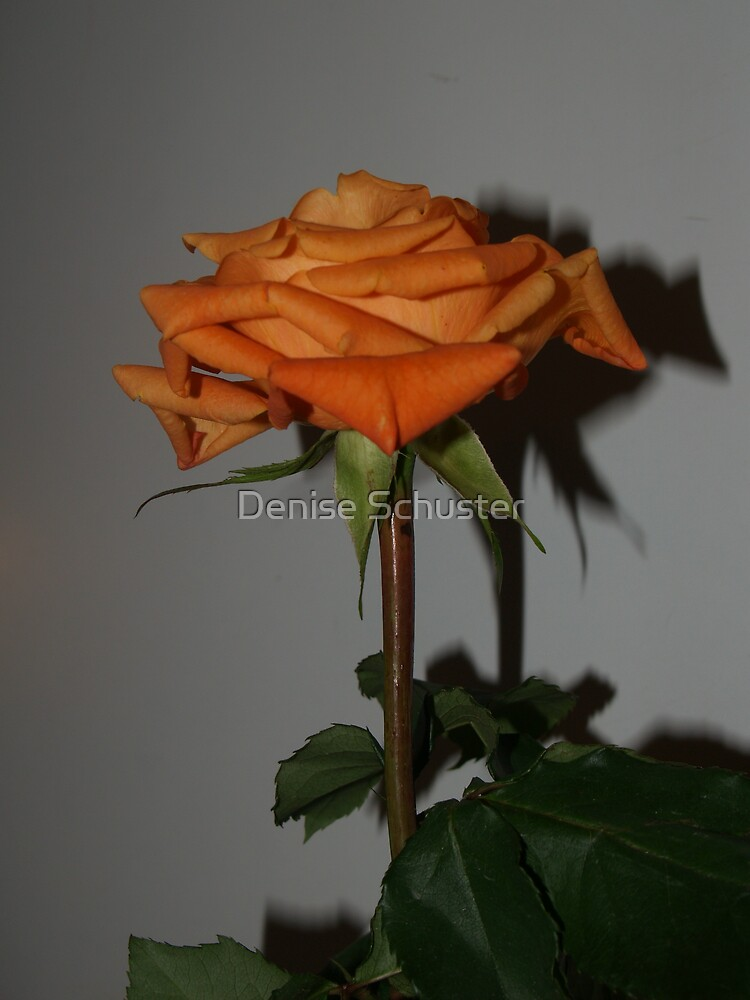 Peach Rose by Denise Wolff