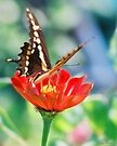 Butterfly Flutter by Mary Campbell