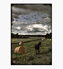 Horse in a Hayfield in Ontario Photographic Print