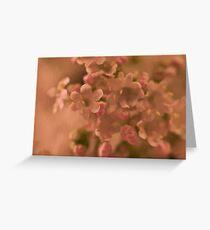 Valarian Blossoms Macro - Digital Oil Painting Greeting Card
