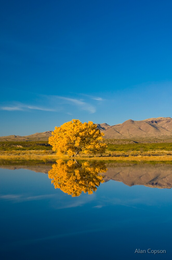 New Mexico. Socorro. Bosque de Apache National Wildlife Refuge. by Alan Copson