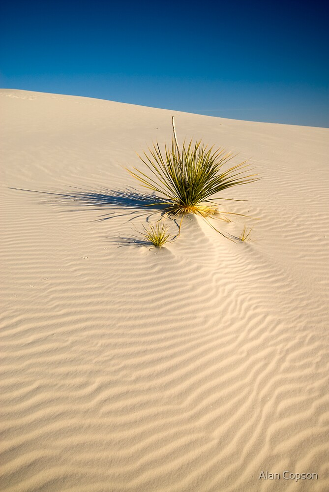 White Sands National Monument. by Alan Copson