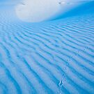 Tracks in the sand. White Sands National Monument (Alan Copson (C) 2007) by Alan Copson