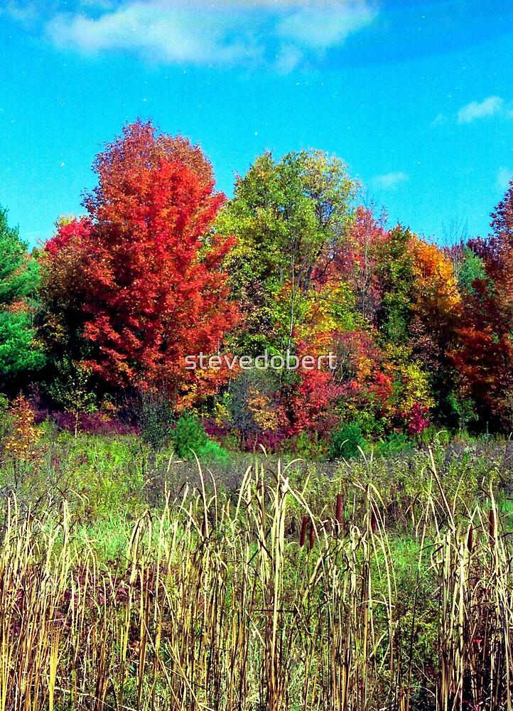 autumn field by stevedobert