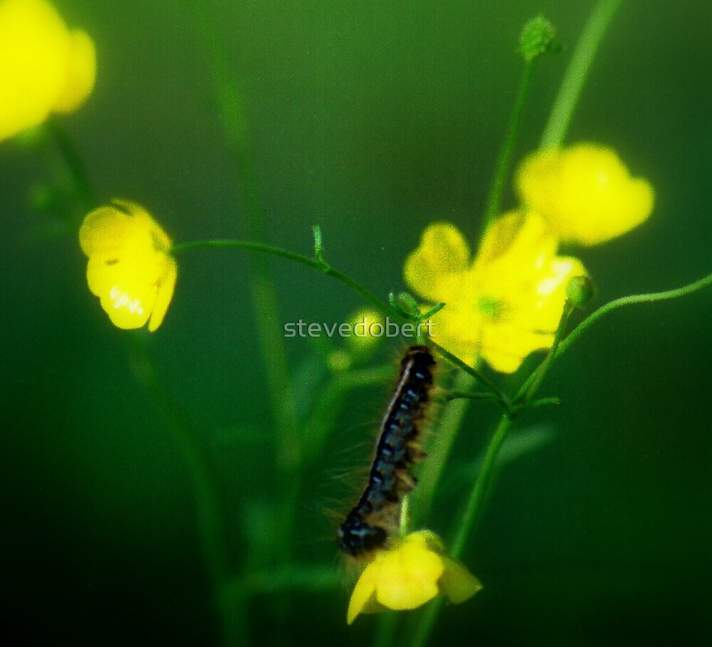 caterpillar series#2 by stevedobert