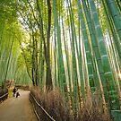 Arashiyama Bamboo Grove, Kyoto by Dieter Tracey