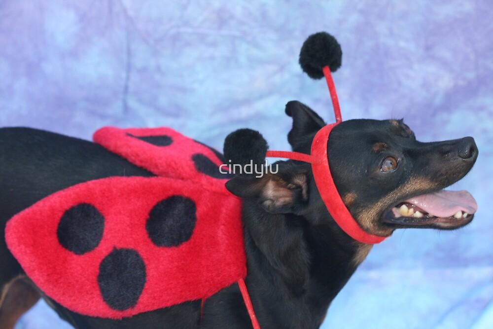 ladybug 1 by cindylu