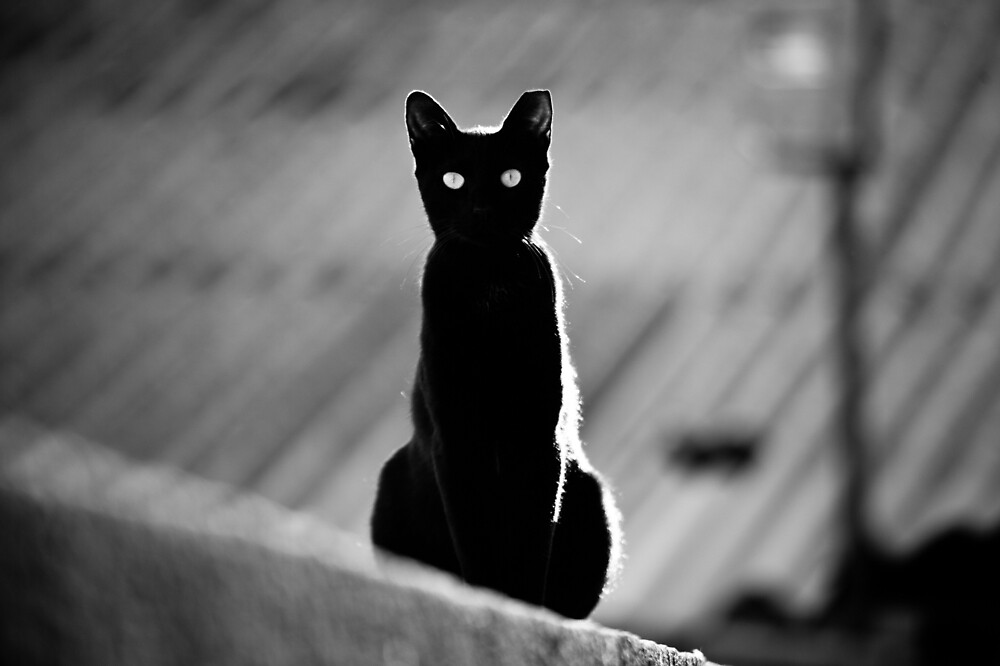 place in the sun for a black cat by Victor Bezrukov
