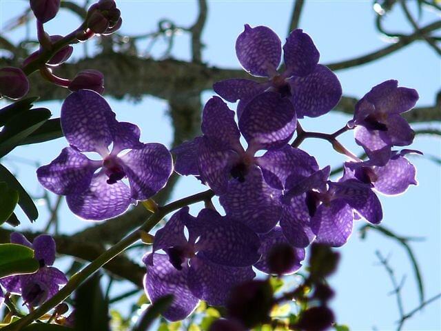 Lavender Shine by elfin4