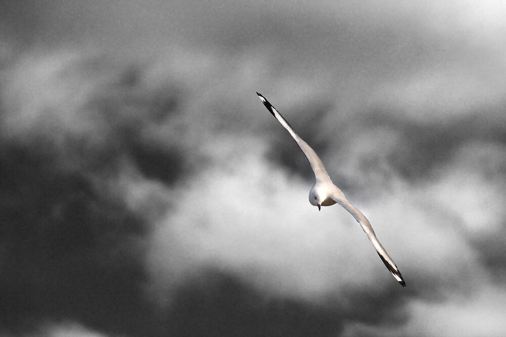 Swansea Seagull by Mark Cowles