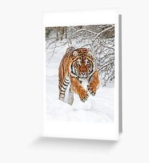 Tiger Sprint Greeting Card
