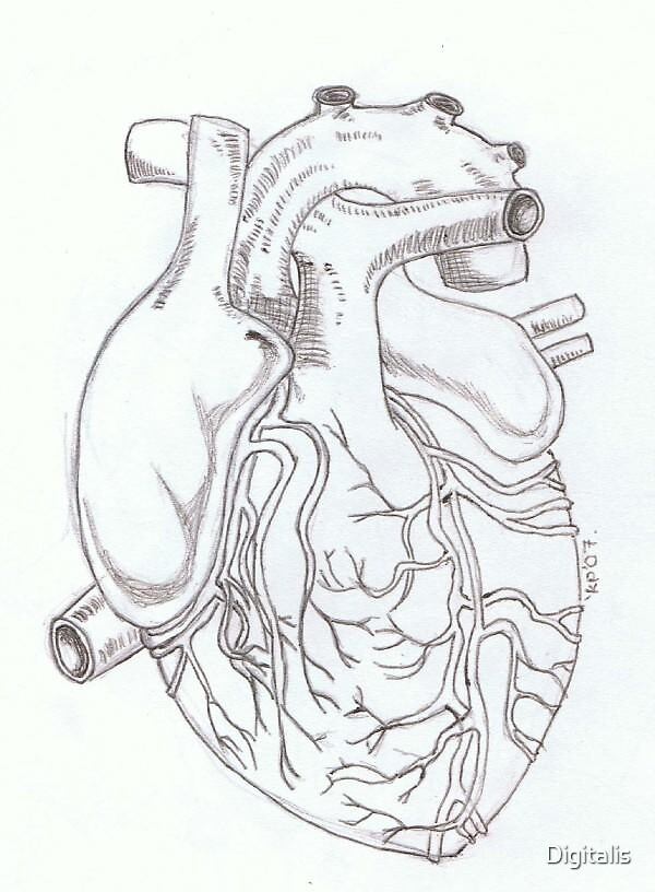 Human Heart by Digitalis
