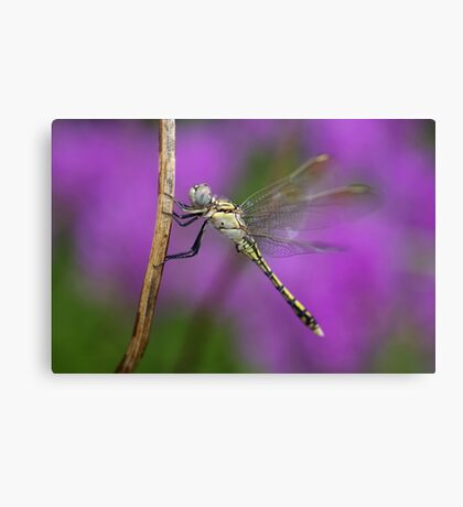 Fairies in my Garden Canvas Print
