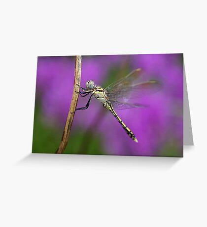 Fairies in my Garden Greeting Card